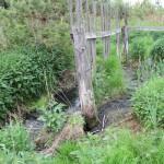 По территории очистных сооружений протекает зловонный ручеек. Фото: Константин Бобылев, «Глобус»